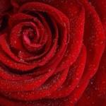 zhenskie-praktiki-usilivayushhie-seksualnosti